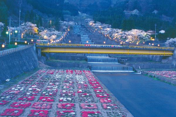 【4月中旬~5月上旬】栃尾温泉桜まつり
